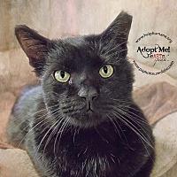 Adopt A Pet :: Monte - Belton, MO