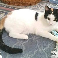 Adopt A Pet :: Madera - Cerritos, CA