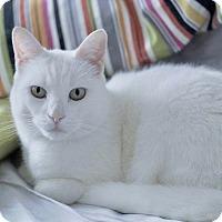 Adopt A Pet :: Carly - Long Beach, NY
