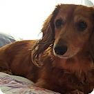 Adopt A Pet :: Miss Nala