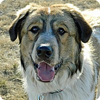 Adopt A Pet :: Bubba* - Cheyenne, WY