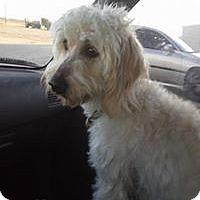 Adopt A Pet :: R.I. SASSY - W. Warwick, RI