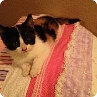Adopt A Pet :: Katie - Justin, TX