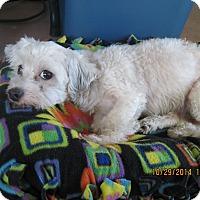 Adopt A Pet :: Babette - N. Fort Myers, FL