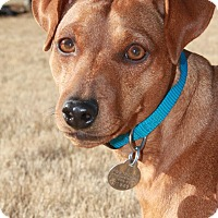 Adopt A Pet :: Elliot - Knoxville, TN