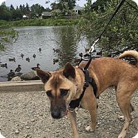 Adopt A Pet :: Sasha - Pitt Meadows, BC