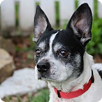 Adopt A Pet :: Mannie Fostered (Darlene) - Troy, IL