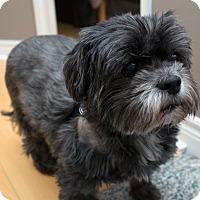 Adopt A Pet :: Diablo - Toronto, ON