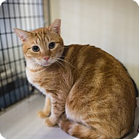 Adopt A Pet :: JESSIE - Phoenix, AZ