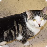 Adopt A Pet :: Charlie Watts - Pottsville, PA