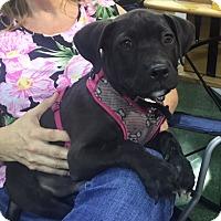 Adopt A Pet :: Hercules - Palm City, FL