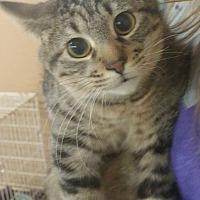 Adopt A Pet :: Kayla - Trenton, MO