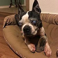 Adopt A Pet :: Henry - Sanger, TX