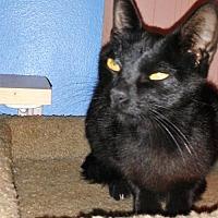 Adopt A Pet :: Sabrina (5604) - Tampa, FL