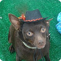 Adopt A Pet :: CHEWY - Riverside, CA