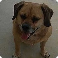 Adopt A Pet :: Mattie - Spring City, TN
