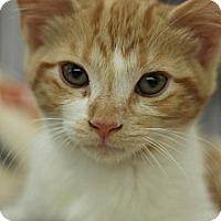 Adopt A Pet :: Miney - Sacramento, CA