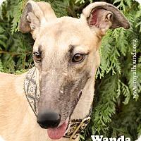 Adopt A Pet :: Wanda - Seattle, WA