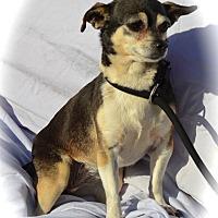 Adopt A Pet :: Angel - Blanchard, OK
