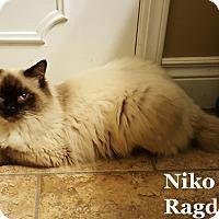 Adopt A Pet :: Niko - Bentonville, AR