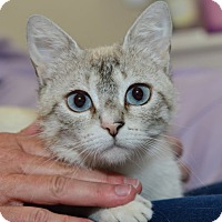 Adopt A Pet :: Dolce - Davis, CA