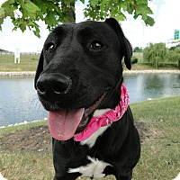 Adopt A Pet :: Chloe - Lewisville, IN
