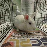 Adopt A Pet :: A1671990 - Los Angeles, CA