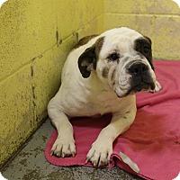 Adopt A Pet :: Patsy - Elyria, OH