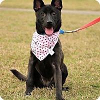 Adopt A Pet :: Cassie - San Mateo, CA