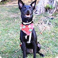 Adopt A Pet :: Candice - Castro Valley, CA