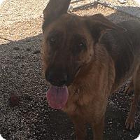 Adopt A Pet :: Charlotte - Hammond, LA