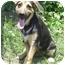 Photo 2 - German Shepherd Dog/Hound (Unknown Type) Mix Dog for adoption in Pike Road, Alabama - Scamper