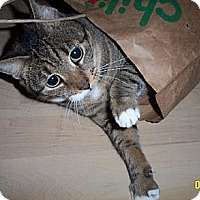 Adopt A Pet :: Katie - West Palm Beach, FL