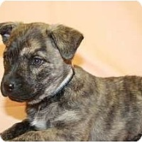 Adopt A Pet :: Pepper - Broomfield, CO