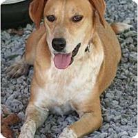 Adopt A Pet :: Izzy - Allentown, PA