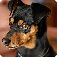 Adopt A Pet :: Titan - Huntington Beach, CA