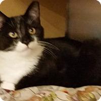 Adopt A Pet :: Fritz - Colmar, PA
