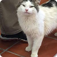 Adopt A Pet :: Vinnie Barbarino! - McDonough, GA
