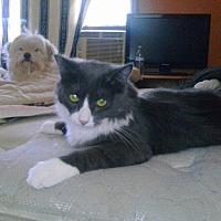 Adopt A Pet :: Milton - Lancaster, CA
