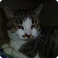 Adopt A Pet :: Xavier - Hamburg, NY