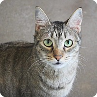 Adopt A Pet :: Addy - Redwood City, CA