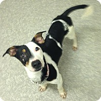 Adopt A Pet :: Lily - Pompton Lakes, NJ