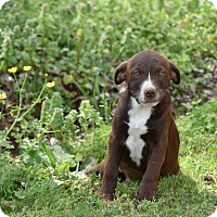 Adopt A Pet :: Hana - Groton, MA