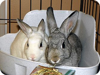 Dwarf Mix for adoption in North Gower, Ontario - Gabby & Diana