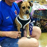 Adopt A Pet :: BOOTSIE - West Palm Beach, FL