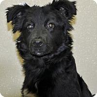 Adopt A Pet :: Pilgrim - Port Washington, NY