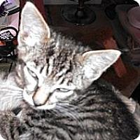 Adopt A Pet :: Toby - Morgan Hill, CA
