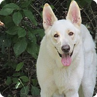 Adopt A Pet :: Skye - Green Cove Springs, FL