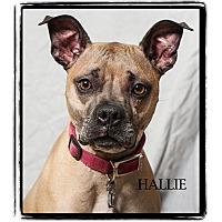 Adopt A Pet :: Hallie - Warren, PA