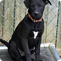 Adopt A Pet :: Meloni - Pleasant Plain, OH